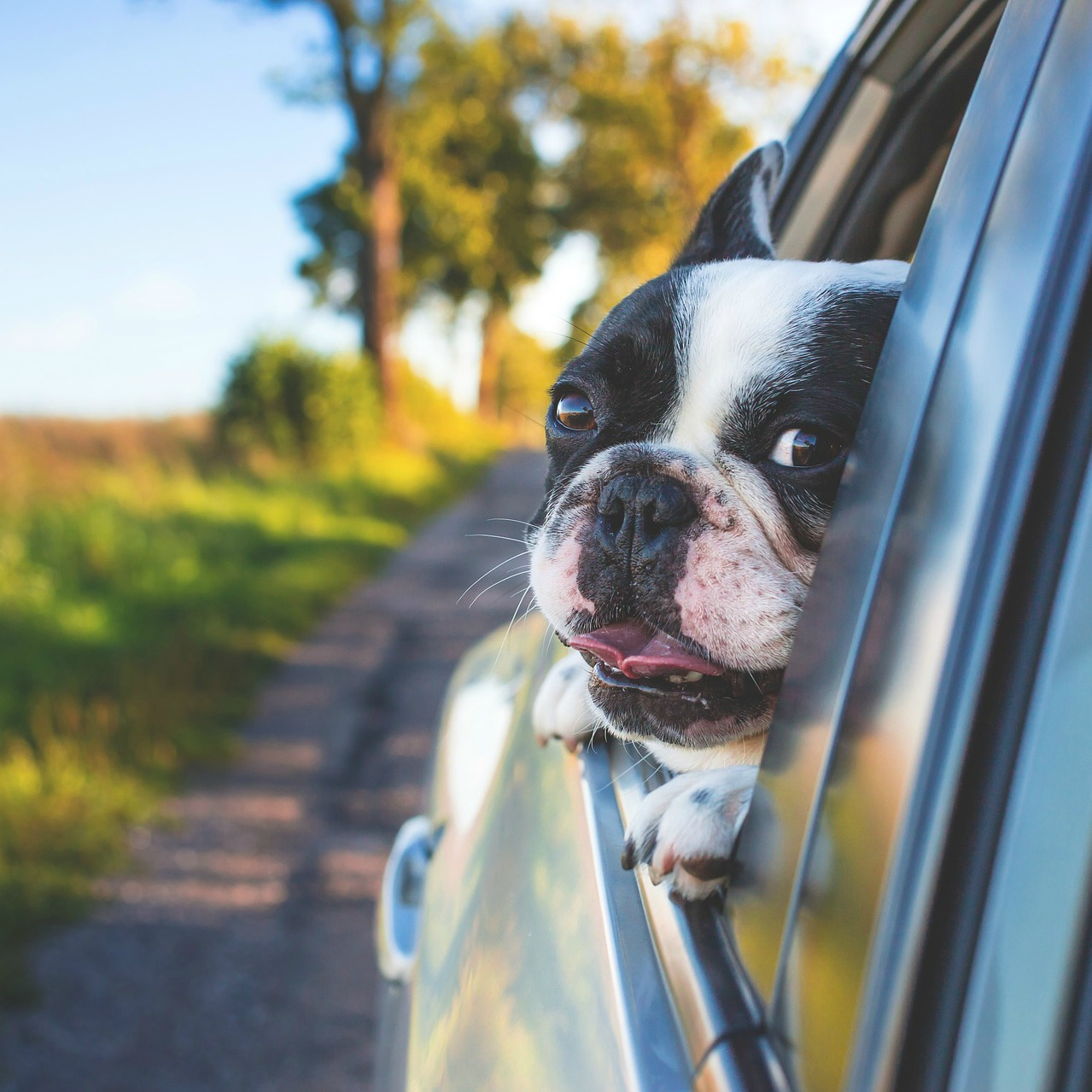 Travelling with dogs in Dogland – In A Car – Dogs and Car Travel