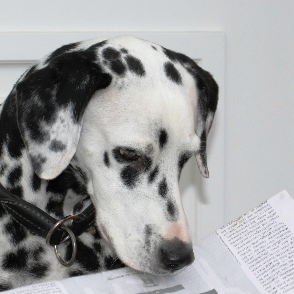 All Things Canine – Dog Website Of The Week – All About Dog Food