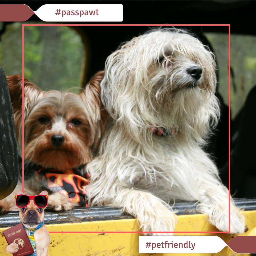 A Dogs Dinner – Fun Photos – Where are you taking your dogs this weekend?