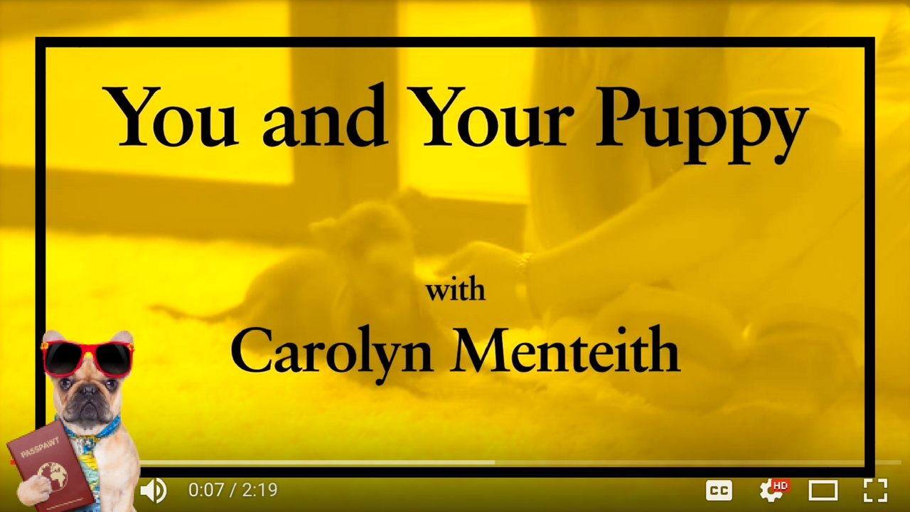 Dog Training Videos – Puppy Training – You And Your Puppy: Early Lessons – Part 3/11