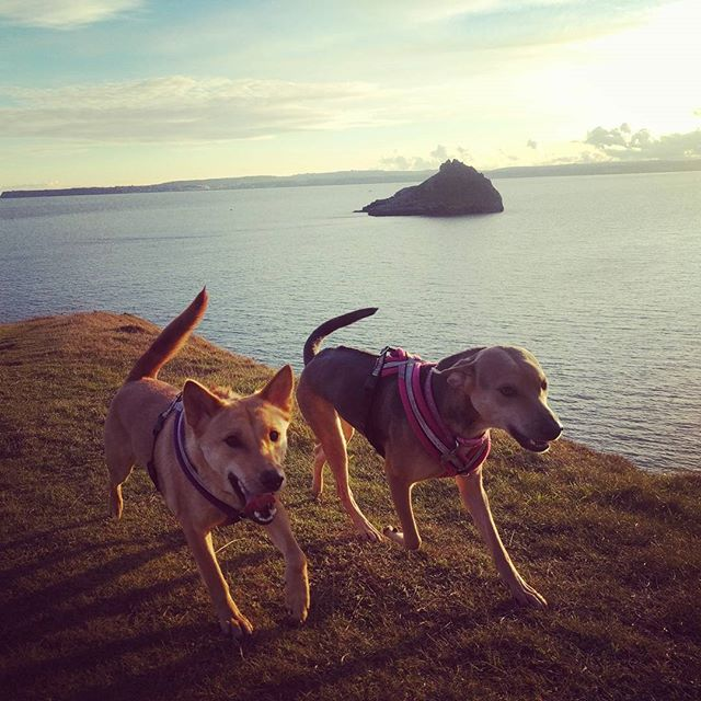 Dog walks on Hopes Nose
