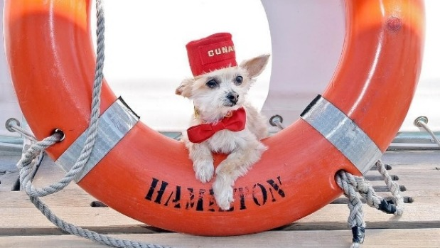 Dog friendly crusies