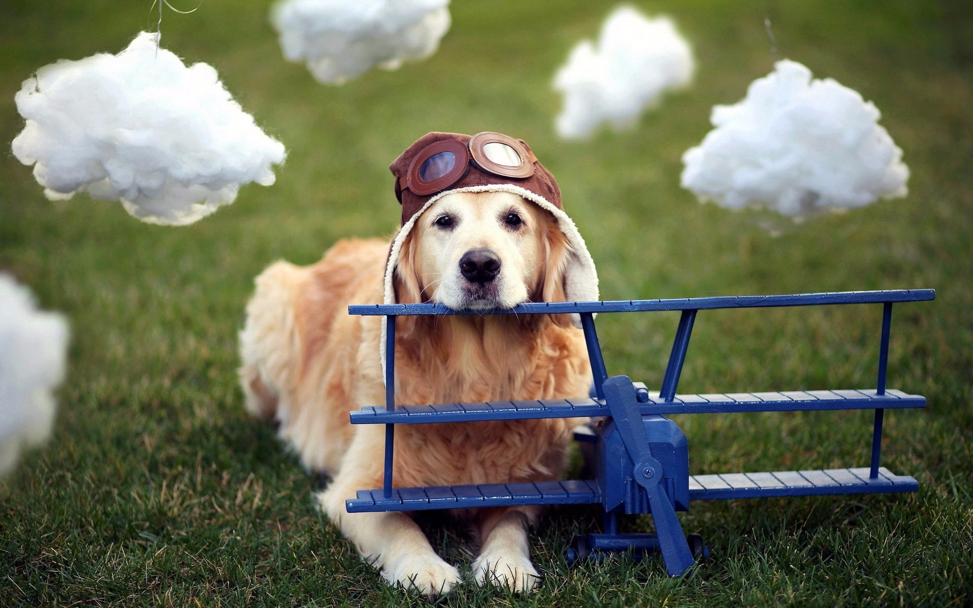 Flying With Your Dog: The Ultimate Guide To Dogs And Air Travel