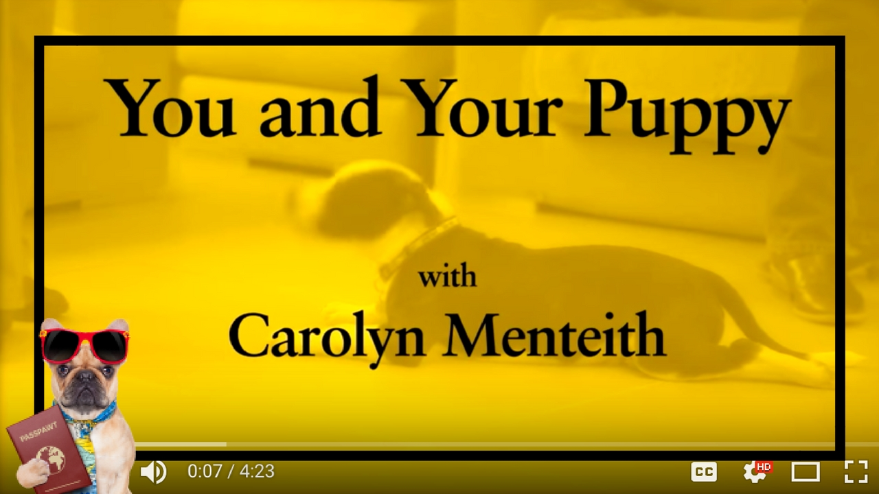 Dog Training Videos – Puppy Training – You And Your Puppy- Puppy Recall – Part 5