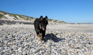 Fabulous Dog Friendly Holiday Cottages In The South Hams Interior Design Ideas Gentotryabchikinfo