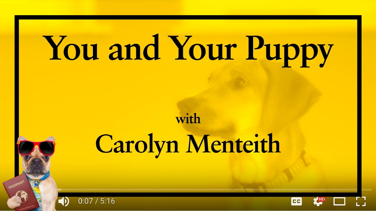 Dog Training Videos – Puppy Training – You And Your Puppy- Sit – Part 6