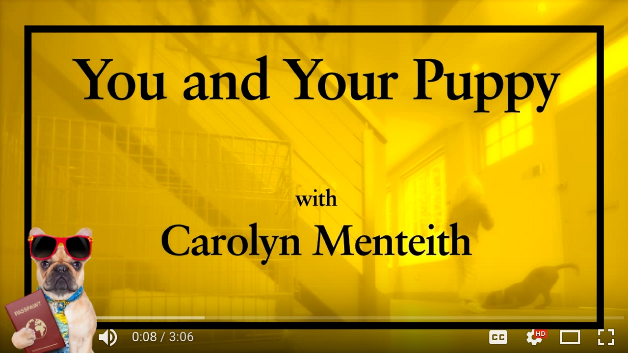 Dog Training Videos – Puppy Training – You And Your Puppy- Puppies & Children – Part 7
