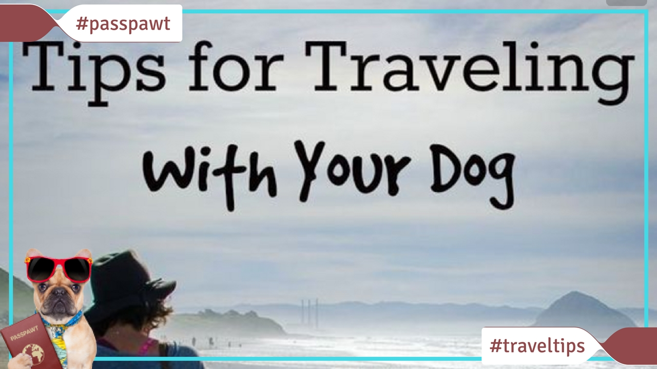 Travelling with dogs in Dogland – Travel Tips – Travelling With Dogs