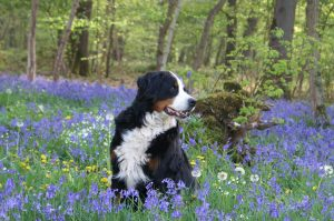 dog friendly holiday cottages in shaldon
