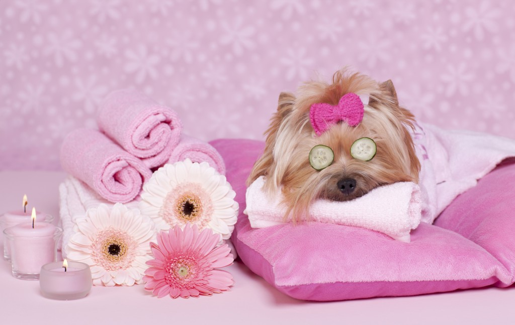 A Guide to Spa Treatments For Dogs In Europe