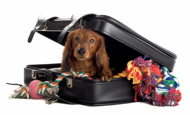 Best Dog Travel Products For Going Abroad With Your Furry Friend