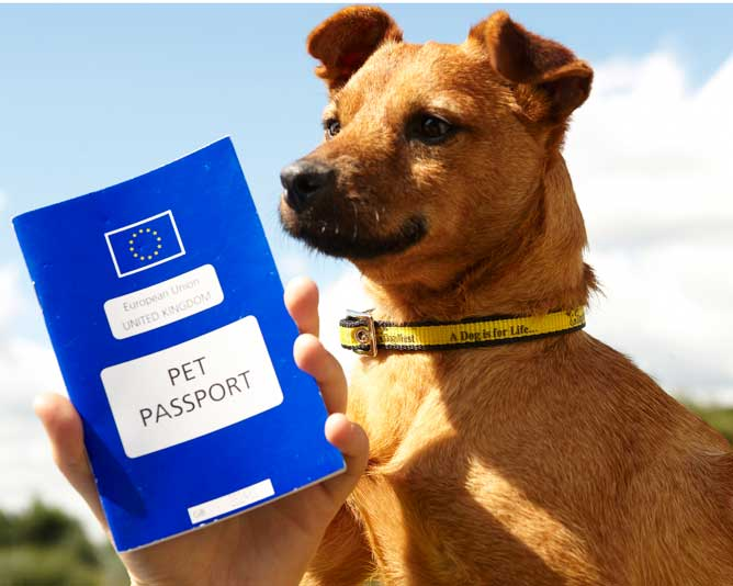 pet passport after brexit