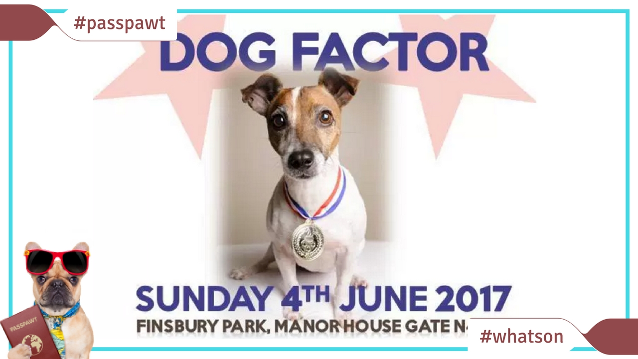 What's On In Dogland – News – Dog Factor