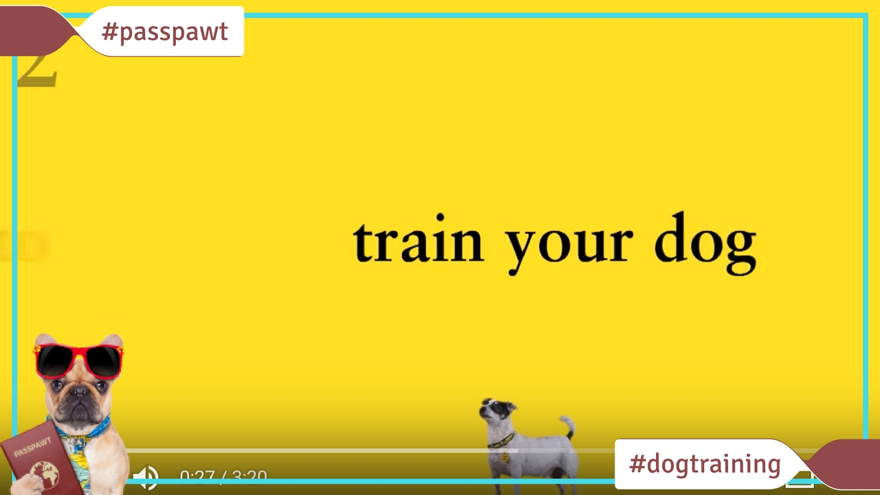 Dog Training Videos – Dog Training Videos – Dog Training Made Easy: How to Train