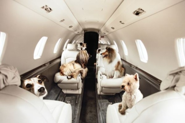 How to fly with dog to the US
