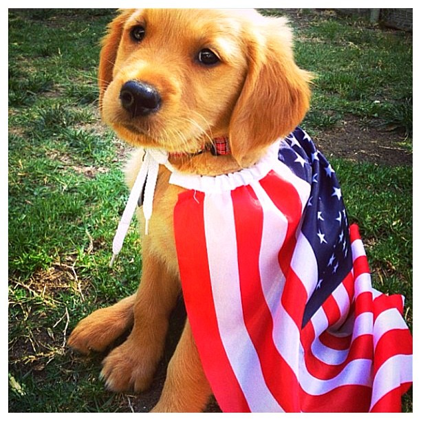 how to bring a puppy to america