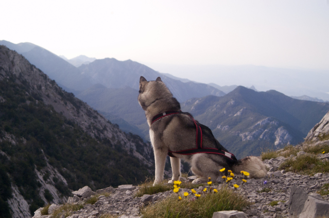 hiking with dog in europe