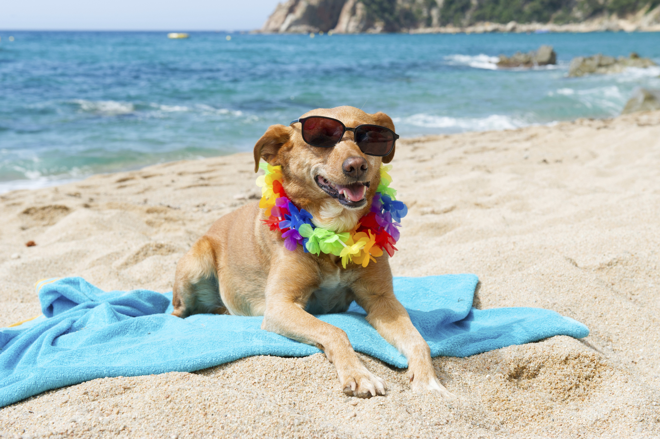 Image result for dogs at beach