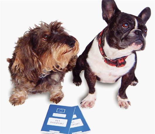 Natural anxiety treatment for dogs