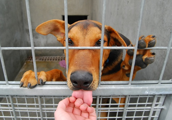5 Notable Animal Rescues And What They Are Doing Right