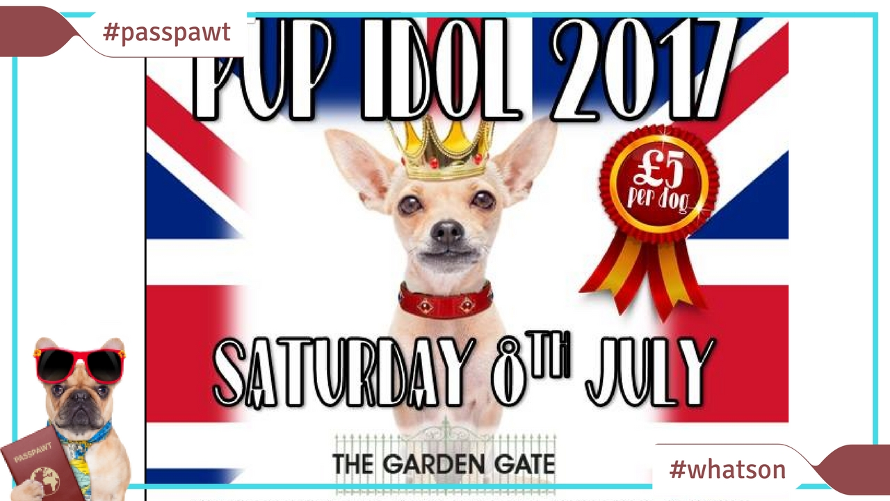 What's On In Dogland – News – Pup Idol