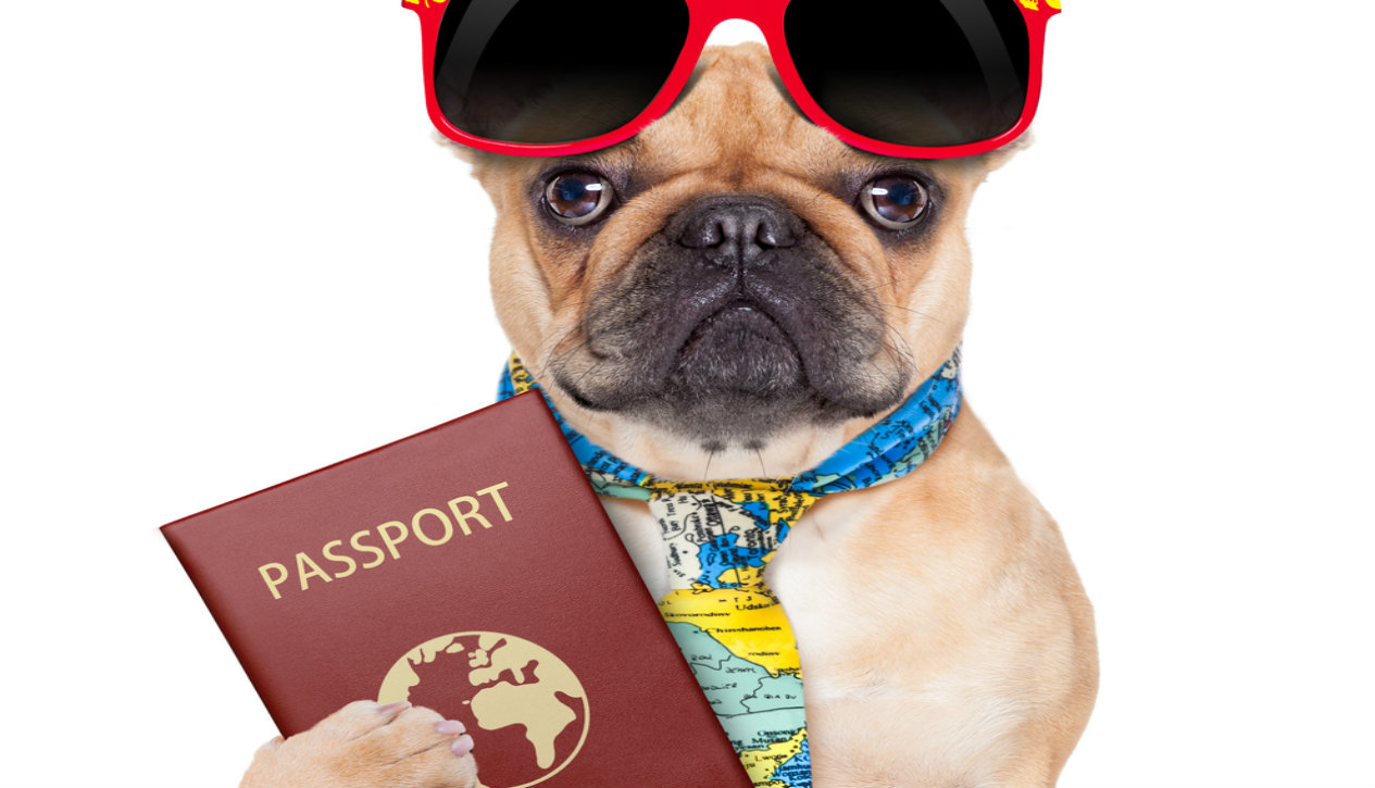 The Ultimate Guide To Pet Passports & Taking Your Pet Abroad