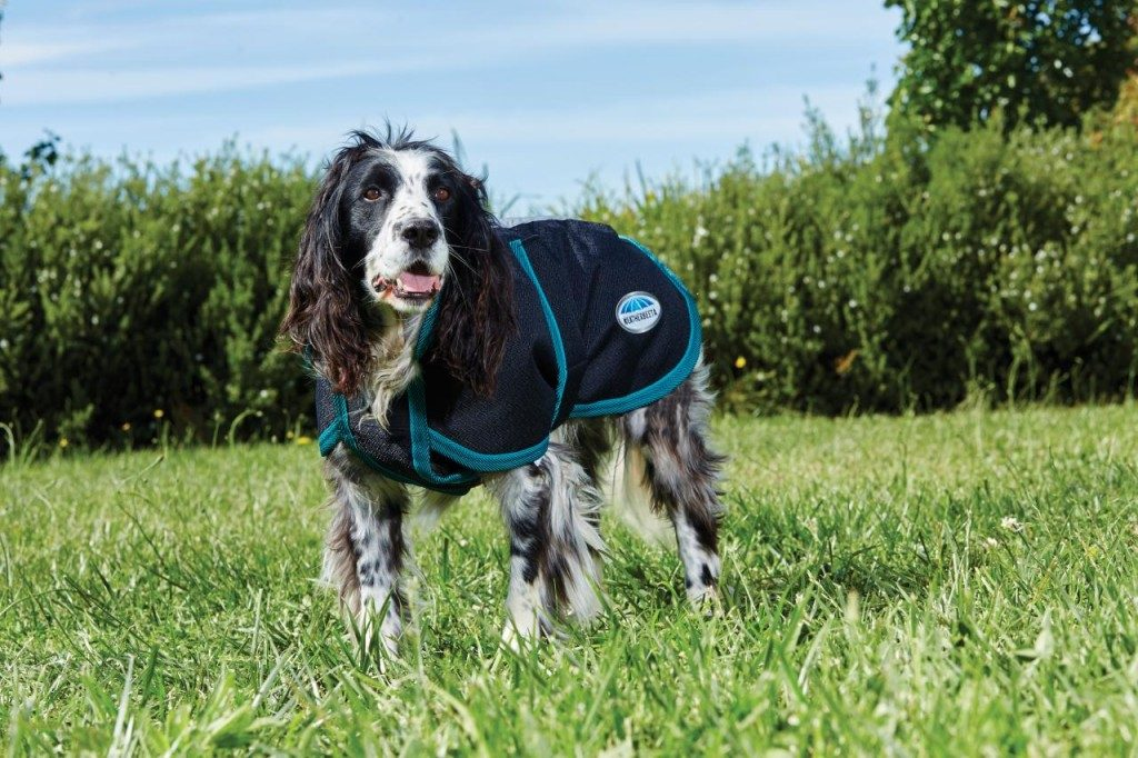 Clothes for Dog Travel