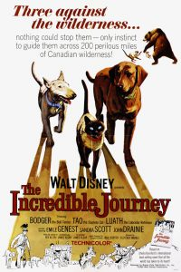 The Incredible Journey - Old dog movies