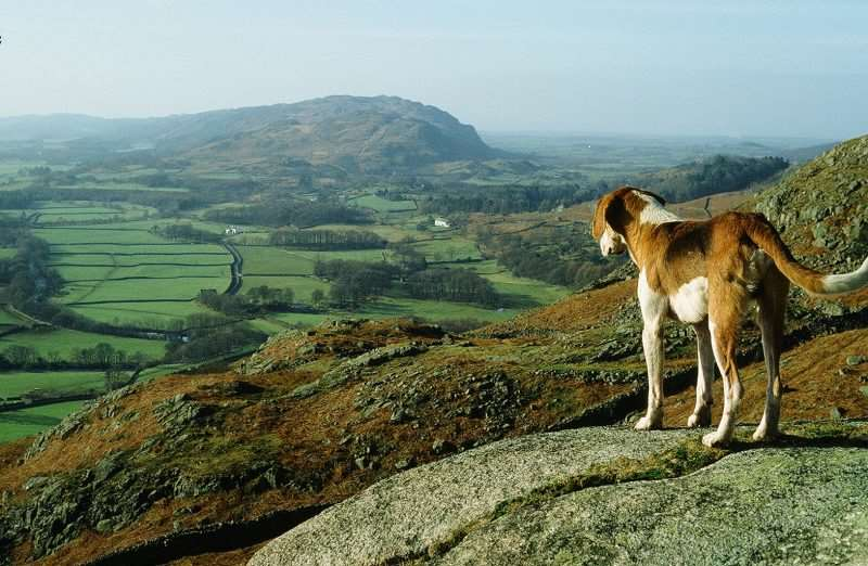 Dog Walking in the Lake District